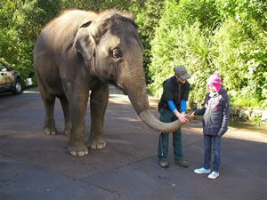 Ruby Seeto - Child Cancer Foundation (CCF) trip to the zoo